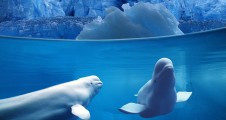 Whales_wallpapers_86